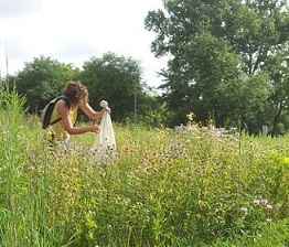 PhD student Vera Pfeiffer catches bumblebees